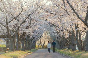Menikmati 6 Destinasi Wisata Alam di Jepang